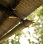 12 LHTE Guest bungalow Extension