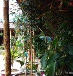 WFS_garden2