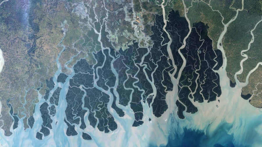 Sundarban : the largest mangrove forest in the world