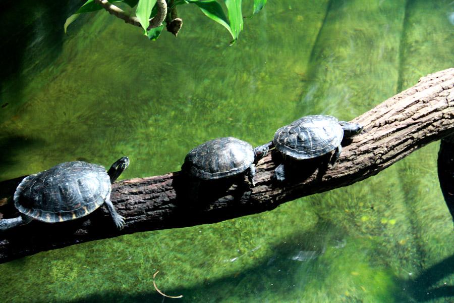 Tortoise © Saimum Kabir