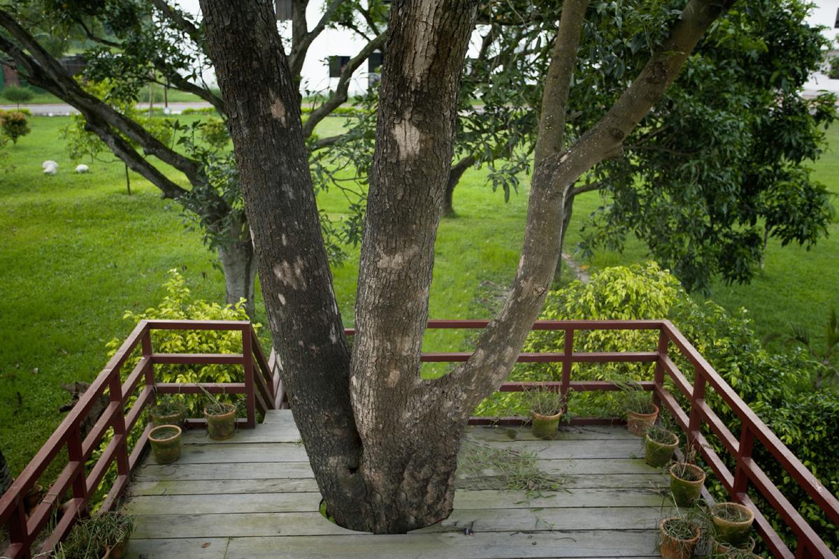 গাছ বারান্দা ( Tree Terrace) , BRAC- CDM, Rajendrapur