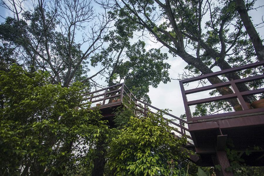 গাছ বারান্দা ( Tree Terrace) , BRAC- CDM , Rajendrapur